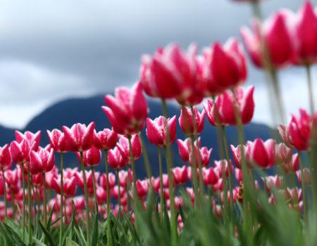 meditazione primavera